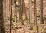 Dana Bradley Hunt-Photography-Legacy Land Team-KW Land Team- KY- Land Realtor-Scott Meredith-14