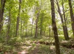 Willis Farm-KY-House-Farm-TImber-Hunting-Land for Sale-Legacy Land Team-Scott Meredith-Real Estate-239