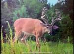 775 Hopkins Deer 2