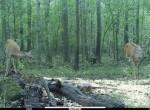 775 Hopkins Deer 3