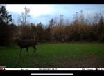 775 Hopkins Deer 4